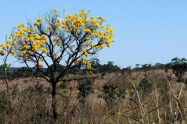 Foto: df.gov.br
