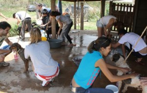 : Abrigo Flora e Fauna/Divulgação. Nos mutirões que acontecem no último domingo de todo mês, as pessoas ajudam a dar banho nos animais abandonados.