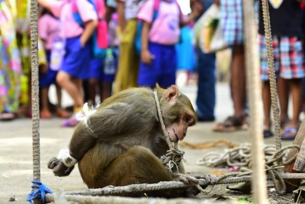 macaco-humilhado-e1466385572790