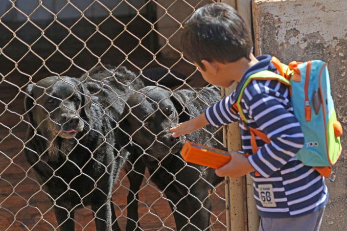 Confira as feiras de adoção de animais