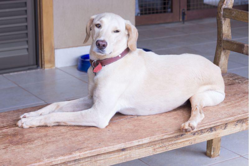 Imagem do Cão Jojo, que possui uma deficiência física
