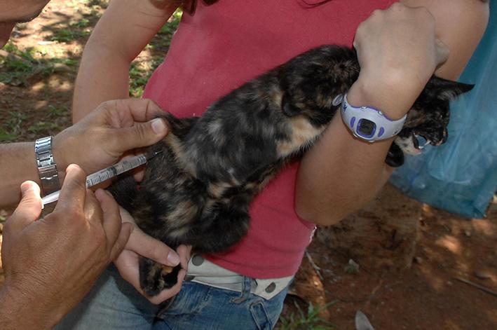 foto mostra um gato sendo imunizado na campanha de vacinação contra raiva animal