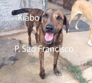 KIABO_SaoFrancisco