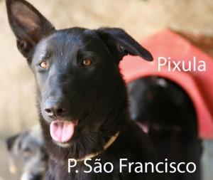 PIXULA_SaoFrancisco