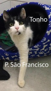 TONHO_SaoFrancisco