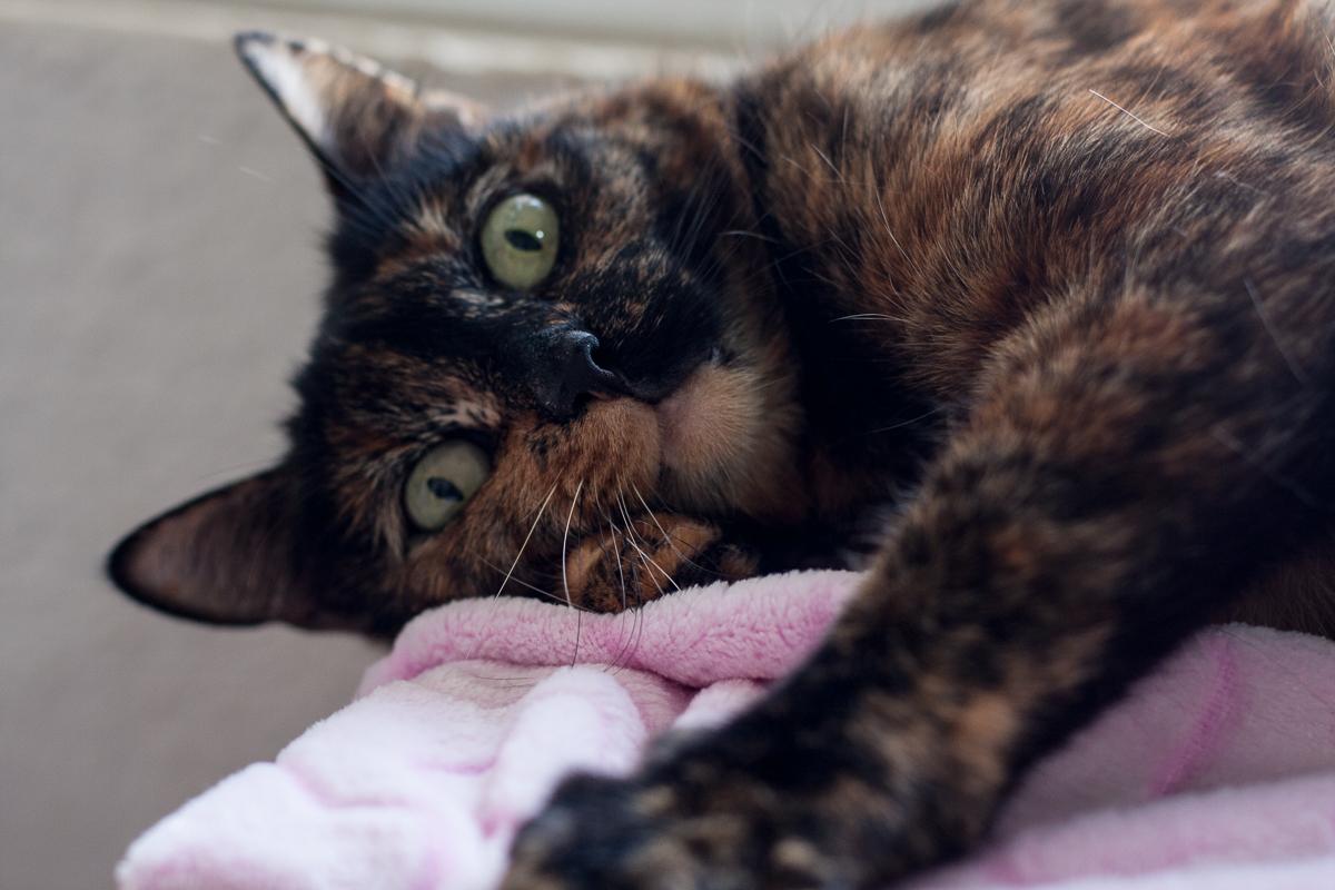 imagem mostra gatinha que espera por adoção.Bazar Solidário