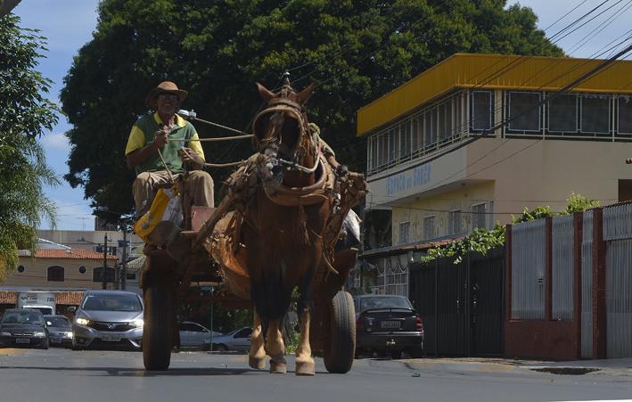 imagem mostra carroceiro para ilustrar matéria sobre proibição de carroças no DF