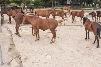 Protetores evitam leilão de cavalos da PM