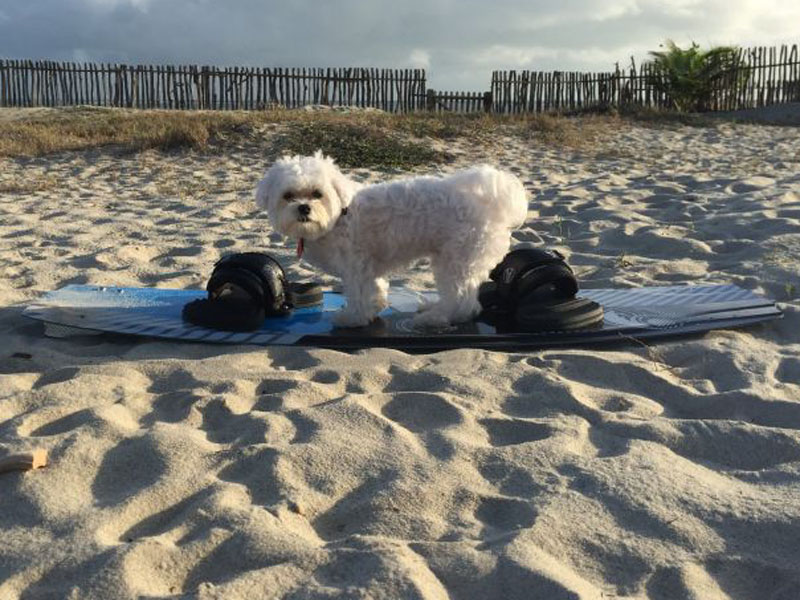 Foto: Arquivo Pessoal.  Luke Skywalker na praia.