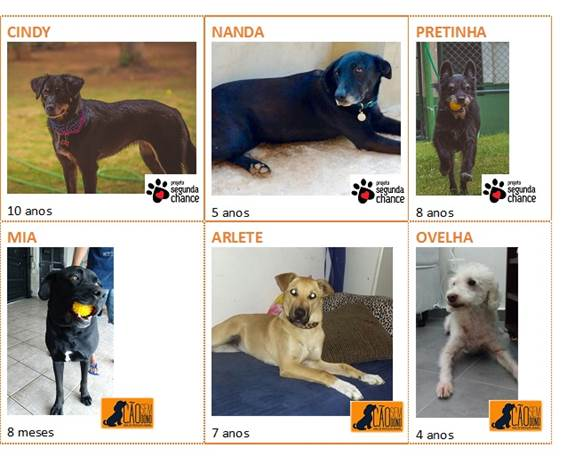 CãoDulas à espera de adoção