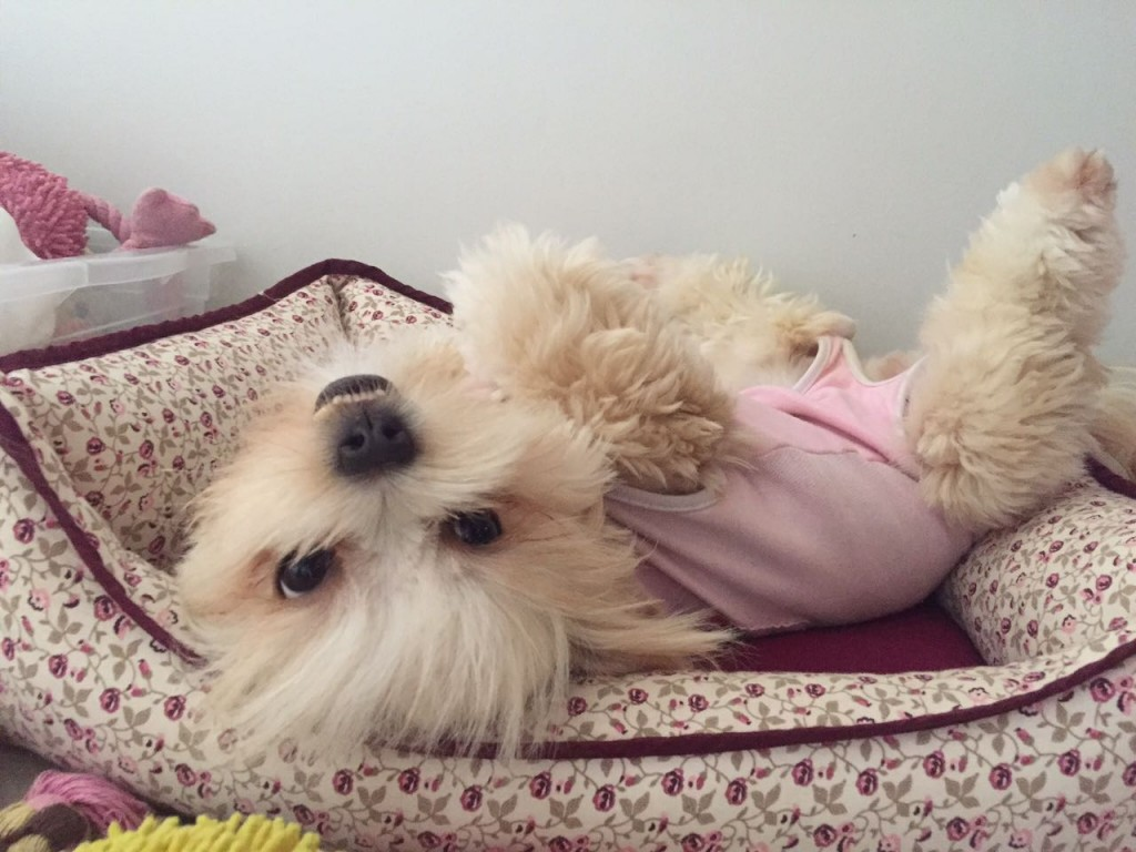 Cindy, divando com seu pijaminha pós-castração