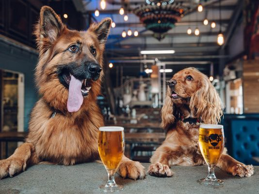 Brewdog: o bar e cervejaria é 100% petfriendly. Crédito: Divulgação