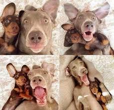 Saiba como tirar fotos de pets
