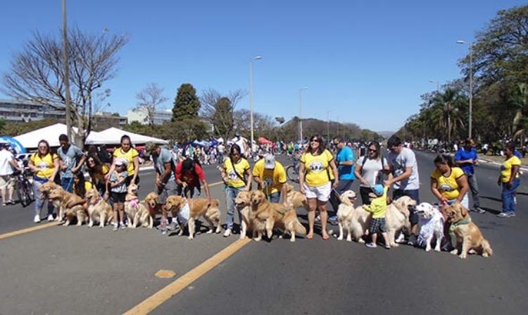 Pet Day, no Eixão: muitas atividades e oportunidade pra os cães se socializarem Crédito: Divulgação