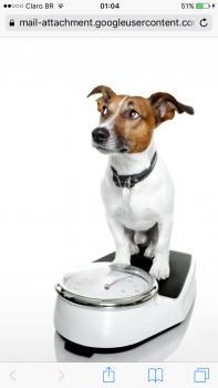 Cães também têm diabetes