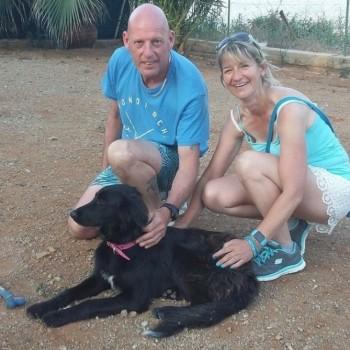 Cachorra de sorte adotada por turistas