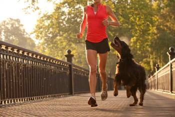 Cães e tutores fitness