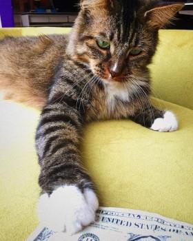 O cofre desse gatinho tem mais dinheiro que o seu