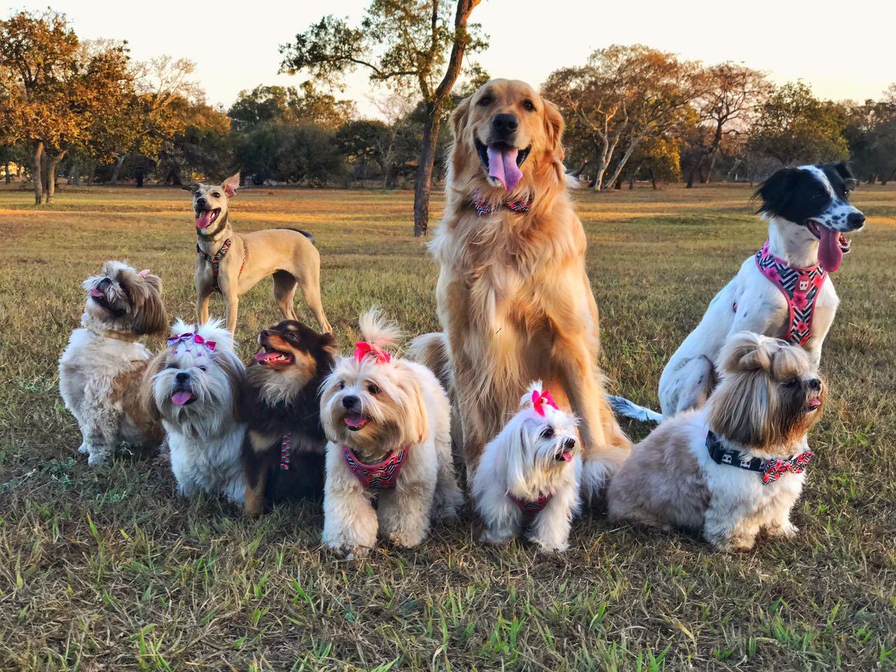 Cachorrada de Brasília toda de rosa para lembrar da importância da prevenção