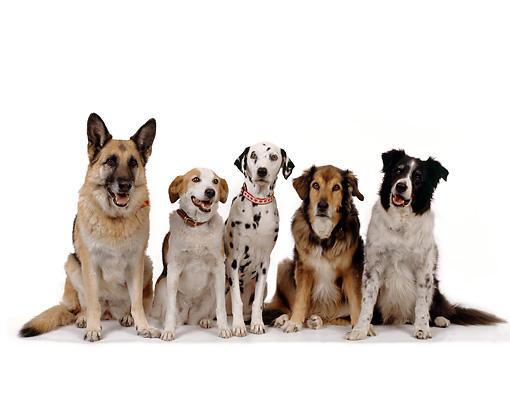 Coberturas especiais contemplam tutores e donos de estabelecimentos do mundo pet Crédito: Reprodução
