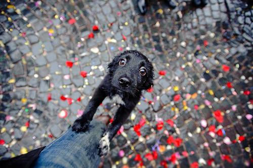"""""""Socooooorro, humano!"""": condicionamento pode ajudar o animal a perder medo de chuva. Crédito: Reprodução"""
