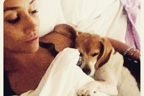 De mendigo a príncipe: Meghan Markle com o cãozinho Guy Crédito: Reprodução do Instagram