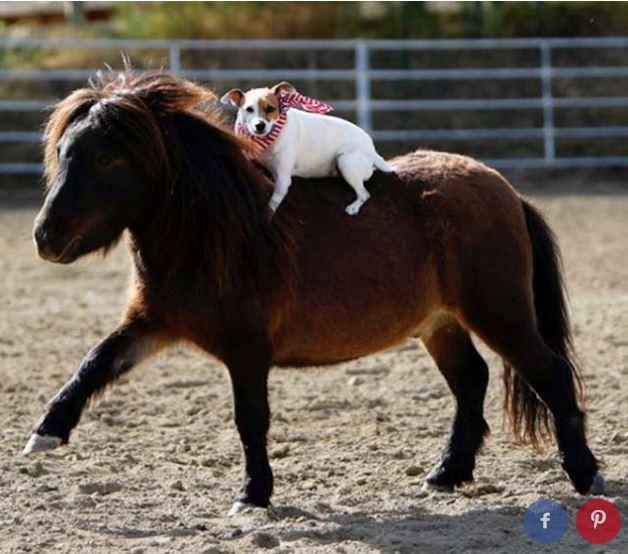 Spanky e Dally: melhores amigos Crédito: Reprodução