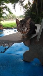 A gatinha Dorothy praticamente renasceu, depois de desenganada Crédito: Arquivo pessoal