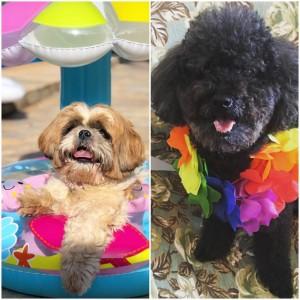 Lola( @instalolaemia) e Bob (@bobtheblackpoodle)estão entre os nomes preferidos
