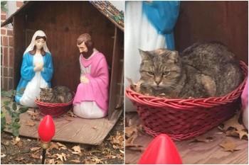 Folgado: esse gato achou que era tudo bem ocupar o lugar de Jesus em um presépio