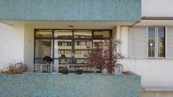 Ibama ameaçou fiscais de prisão se mexessem com urubus em apartamento