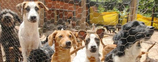 foto de cães em um abrigo que participa de feiras de animais para adoção.feiras de adoção pet