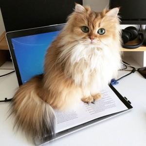 gato-mais-bonito-da-internet-bluebus3