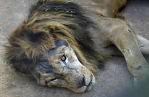 Dudu é um dos animais mais velhos do Zoológico de Brasília: 22 anos.Foto Ed Alves/@cbfotografia