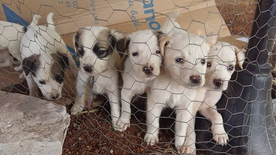 imagem mostra cãezinhos para adoção em abrigo.Feiras de adoção pet.