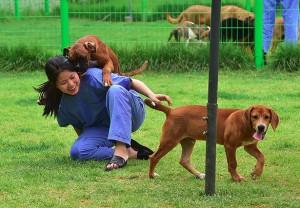 Desde 2006, a 'Sooam Biotech Research Foundation' clonou cerca de 800 cachorros.