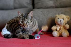 Foto: Antonio Cunha/@cbfotografia.O gato Athos espera por adoção.
