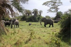 foto: Santuario dos Elefantes/Divulgação.