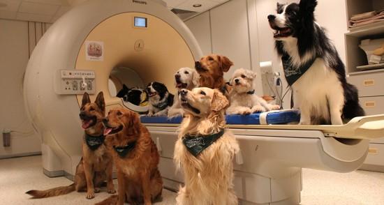 Vários animais (cachorros) ao redor de um aparelho de ressonância magnética