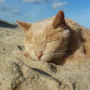 Tigger tira um cochilo em seu lugar preferido: a praia (Foto/Tigger's Story- The 21 yr. Old Cat & His Bucket List)