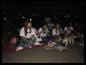 foto de cães e seus tutores durante sessão no cine Drive in em Brasília onde acnteceu a apresentação do filme Pets - a vida secreta dos bichos