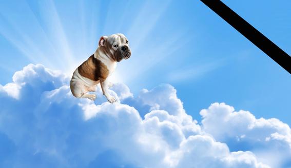 foto montagem do cão Bono Blue, que faleceu nessa segunda-feira-animais