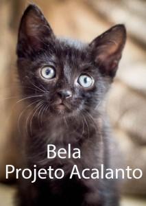 BELA-acalanto
