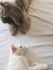 foto mostra amizade entre cães e gatos