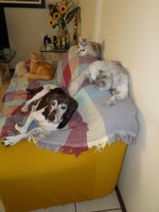 foto mostra amizade4 entre cães e gatos