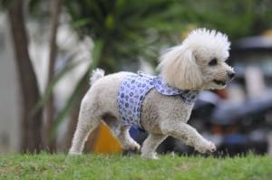 Cachorro Arthur - Crédito: Minervino Junior/CB/D.A Press
