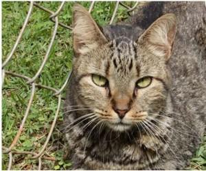 imagem mostra gatinha para adoção no bazar solidário