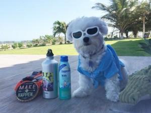 Saúde Pet: Imagem mostra cãozinho na praia