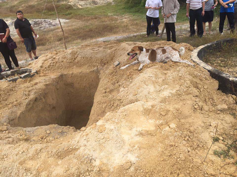 Crédito:Leong Khai Wai. Bobby acompanhou o funeral da tutora