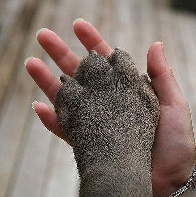 paw-in-hand